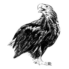 Hand drawing of an eagle. Vector illustration