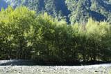 上高地 自然 木々