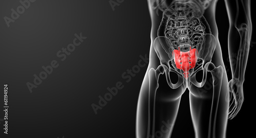 3d render illustration sacrum bone - back view