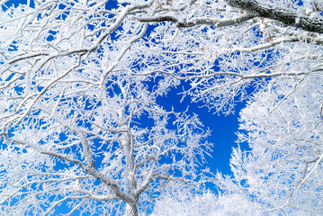 background snow tree