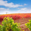 Carinena and Paniza vineyards in autumn red Zaragoza Spain