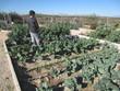 boy watering vegetable garden