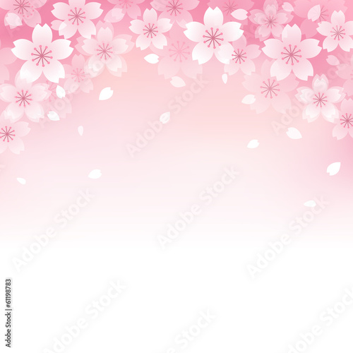 桜 背景 Beautiful Cherry blossom background