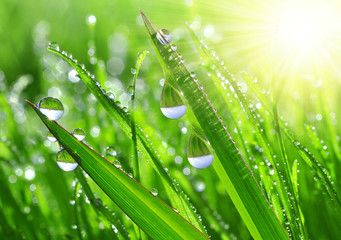 Fresh grass with dew drops close up © vencav