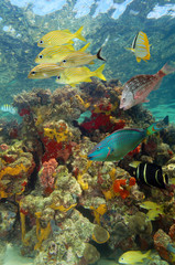 Underwater scenery with colorful marine life