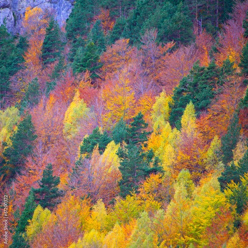 Autumn forest in Pyrenees Valle de Ordesa Huesca Spain