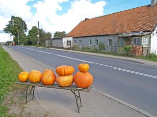 Roadside trade in pumpkins in the village