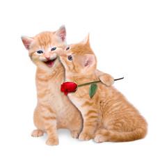 Zwei verliebte Katzen mit roter Rose