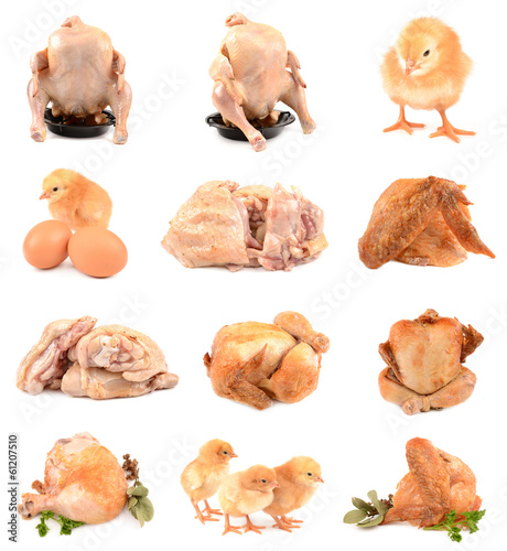 collection of chicken