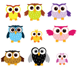 Owls colors