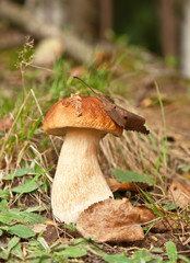 cep in forest