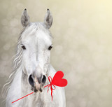 Fototapety Horse keep Heart Lollipop for Valentine's Day