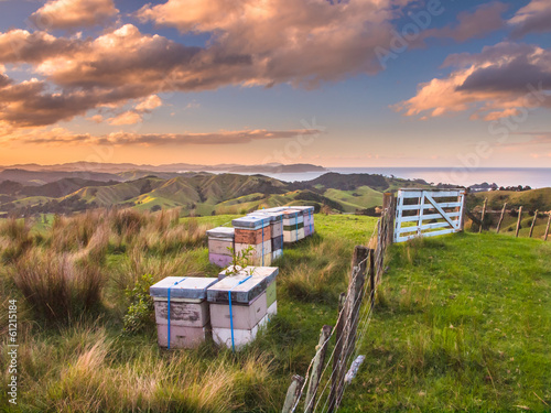 In de dag Heuvel Bee Hives on Top of a Hill in Bay of Islands, New Zealand