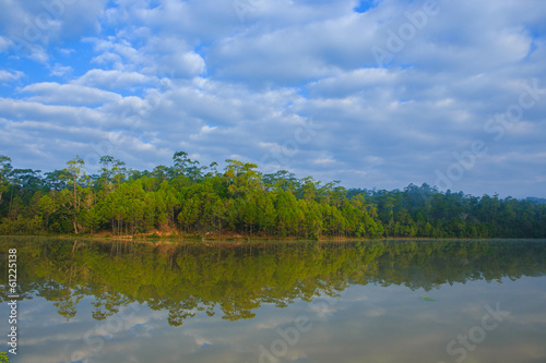 water reflection of pine tree in reservior