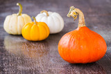 Colorful Pumpkins on wood background