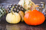 Colorful Pumpkins and fruits on wood background