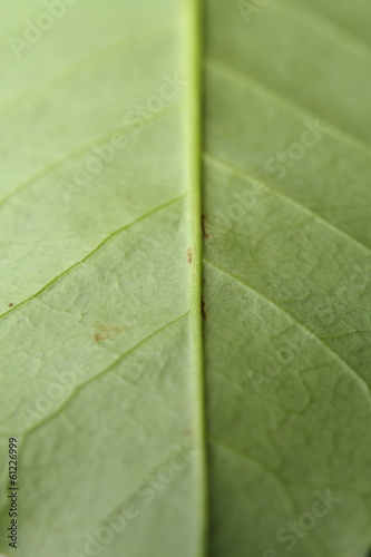 the veins of a leaf
