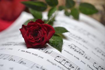 San Valentino_rosa_musica