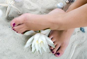 Wellness: Frauenfüße mit Seerose im Sand