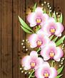 Wooden background with pink  orchids