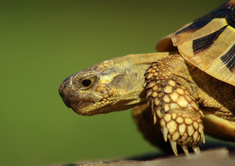 Turtle portrait