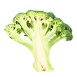 Green broccoli sliced in cutaway isolated