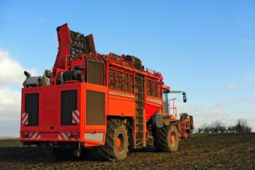 Maschine zur Ernte von Zuckerrueben