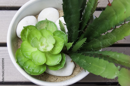 Kalanchoe in pot with white rock on sand