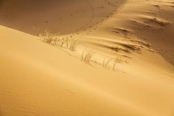 Erg Chebbi Wüste, Marokko
