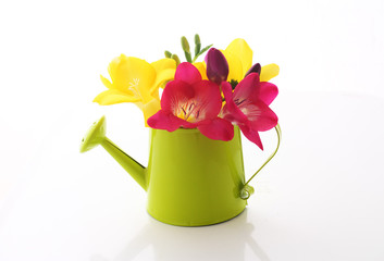 Beautiful freesia flowers  in watering can isolated on white