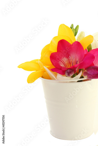 Beautiful freesia flowers  in bucket isolated on white