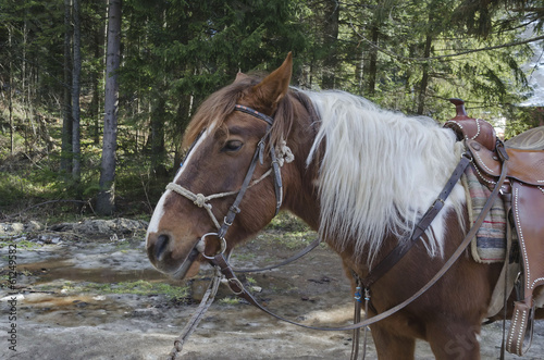 Horse riding club in Borovetz resort. Rila mountain, Bulgaria