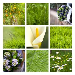 Végétation au printemps