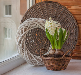 Hyacinths  in basket
