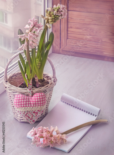 Blooming pink hyacinth. Toning