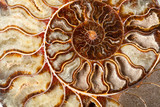 Beautiful ammonite mineral