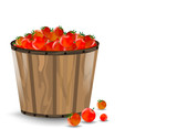 tomatoes in bucket on a white background
