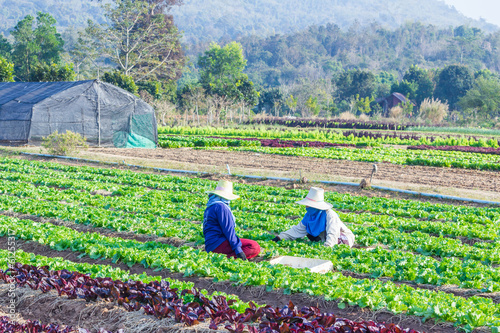 Converting agricultural land to grow vegetables in Thailand.