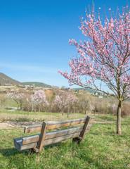 Blick auf den Mandelblütenort Gimmeldingen in der Pfalz
