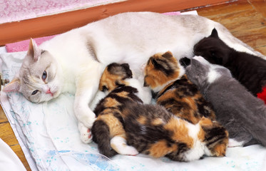 Adorable small kittens with mother cat.