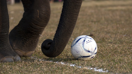 Football game - Elephant festival, Chitwan 2013, Nepal