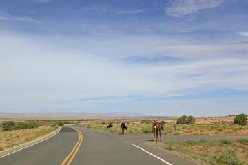 chevaux au bord de chelly , Arizona