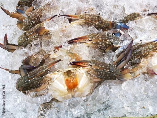 Fresh crab, seafood ingredient