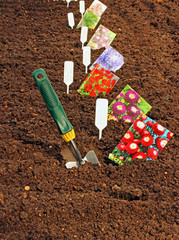 Sowing seeds in the soil in the garden