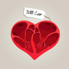Valentites anatomy heart