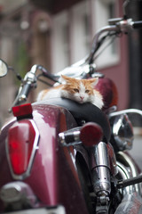 kitten on a motor scooter