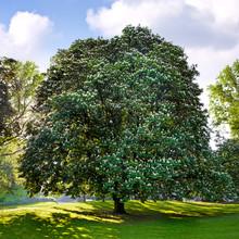 Park. Grupa drzew na łąki letnich.