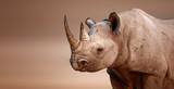 Black Rhinoceros portrait