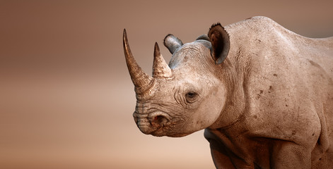 Black Rhinoceros portrait