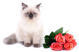 Beautiful cat with flowers isolated on white